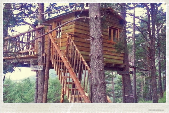 Tree house yoga retreat